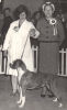 <h5>Previously in the History page the story of the 'Anisor' Boxers is recounted. <br>Here are some photos of those dogs owned in New Zealand and the wonderful ride with them